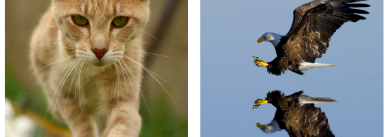 IB Learner Profile with Animals…Yeah, Why Not?